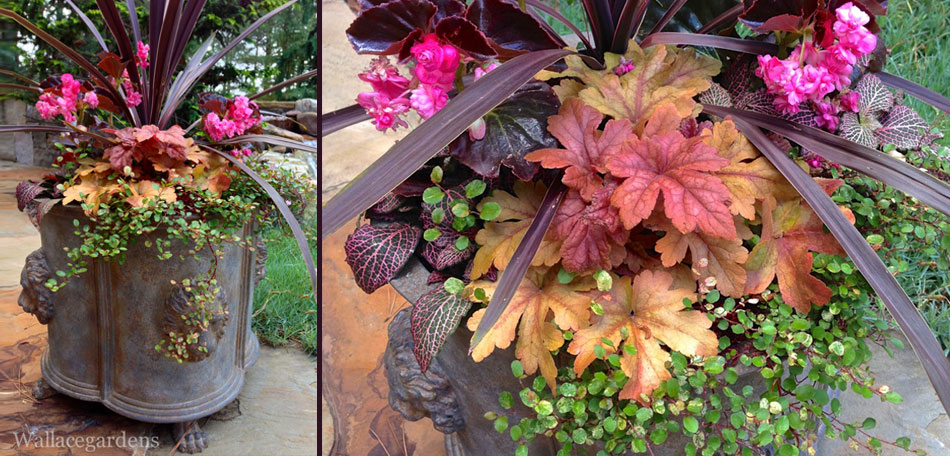 planter ideas, container garden