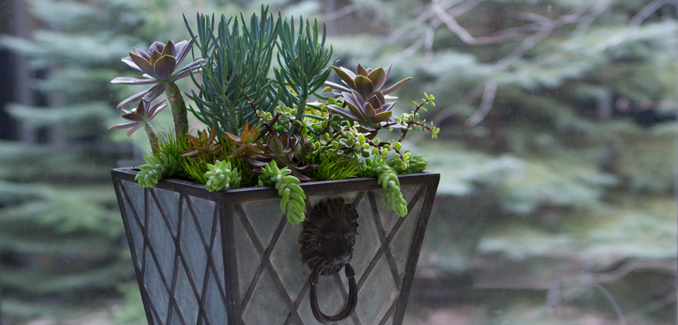planting succulents, container garden combination