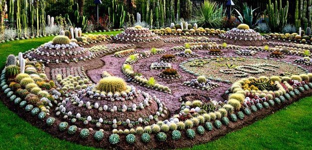 Brilliant Cactus Gardens Garden And Design Ideas