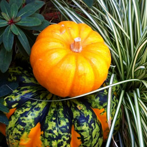 Pumpkin Decorating Ideas: Pumpkin, Pumpkin, Gourd, Gourds, Porches, Decorating, Decorating with Pumpkins, Pumpkin Decorating, Grasses, Gourds and Grasses Combination, Wallace Gardens