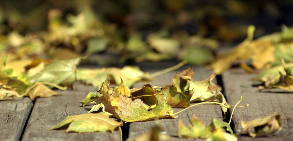 fall cleaning tips, leaves, wood deck