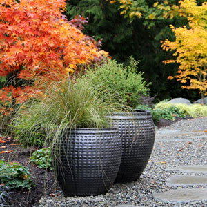 Fall Patio, Patio, Patios, Fall, Autumn, Patio Ideas, Patio Decor, Patio Pictures, Patio Photos, Patio Designs, Patio Decorating, Seattle, Washington, Stone Patio, Path, Stepping Stones, Garden, Foliage, Autumn Foliage, Colors, Landscaping, Japanese Maple, Planters, Pots, Container Gardening, Gardens, Shrubs