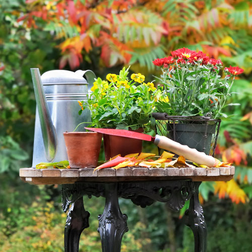 make the transition to fall plants - Fall Garden Plant