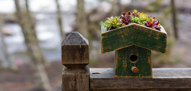 Hanging Flowers: On a Birdhouse Roof