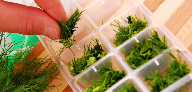 Freezing Herbs - Dill in an Ice Cube Tray