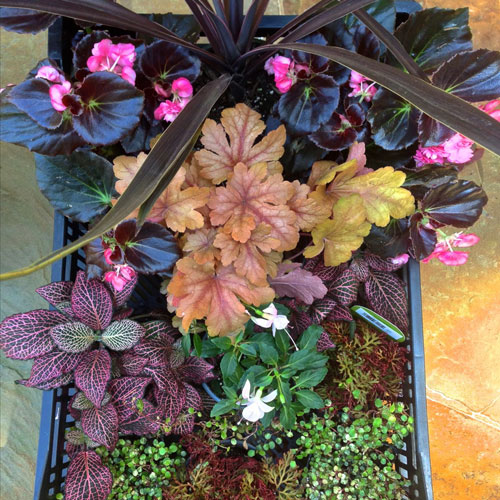 planter ideas, plant shopping