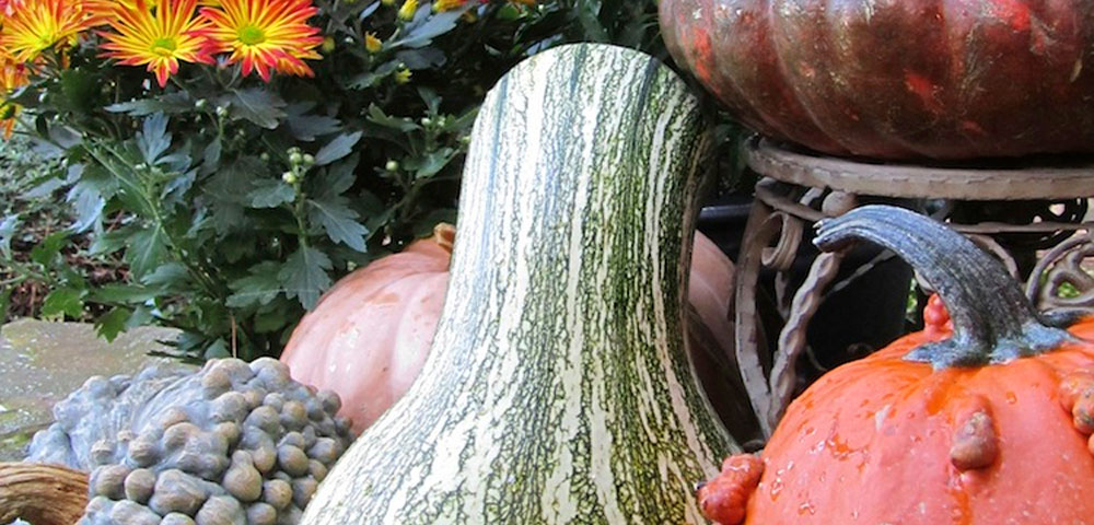 Pumpkin Decorating Ideas: Pumpkin, Pumpkin, Gourd, Gourds, Porches, Decorating, Decorating with Pumpkins, Garden, Colors, Combinations, Gourds and Flowers