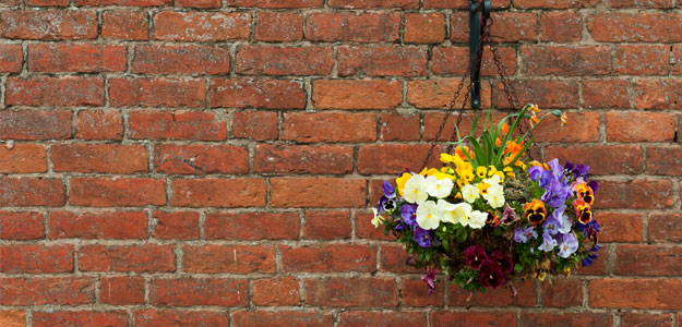Hanging Flowers: On A Brick Wall
