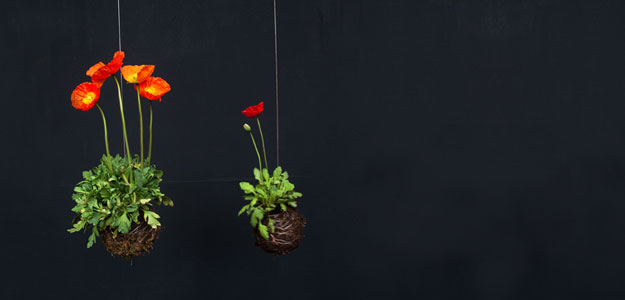 Hanging Flowers: Flower Balls by Fedor van der Falk