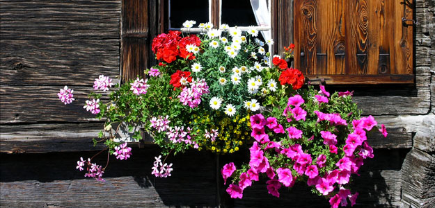 Hanging Flowers: Window Flower Box
