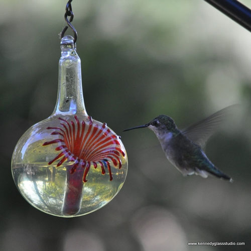 hummingbird, hummingbirds, bird feeder, bird feeders, birdfeeders, birdfeeder, hummingbird feeder, hummingbird feeders, glass, sculpture, outdoor decor, decor, glass sculpture, hanging sculpture, decorative, nectar, sugar water, winter birds, Miami, Houston, photograph, photo, beauty, red flower, flower, trumpet honeysuckle