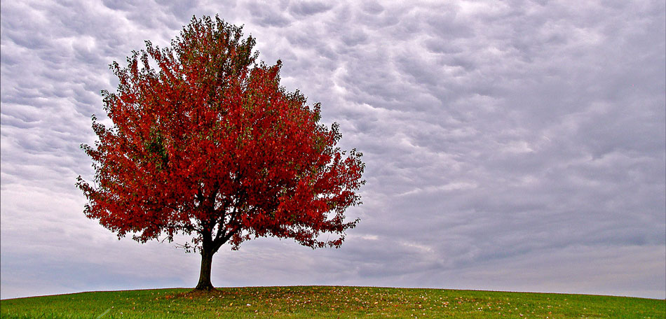 fall foliage, Masterson Station Park, Kentucky