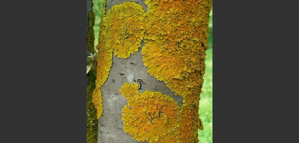 Mayfield Garden, Australia attractions, tree, common orange lichen