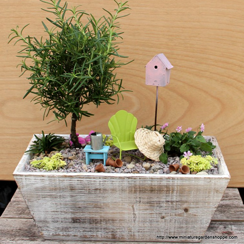 Planting succulents container garden ideas bombay outdoors for Fairy garden box ideas