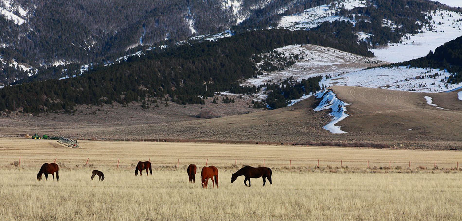 Horses, Rocky Mountains