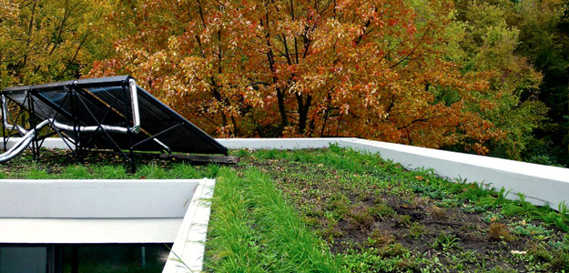Rooftop Gardens: Ancient Idea - Modern Benefits - Rooftop Garden - Green Roof - Montreal