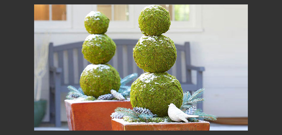 container gardening holiday container gardens holiday planters moss balls holiday decorations