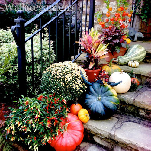 pumpkin decorating ideas, fall, autumn, porch, front porch, pumpkins, gourds, fall flowers, container gardening, fall container gardens, fall decor, autumn decor, outdoor decor, outdoor decorating, fall decorating, autumn decorating, décor, decorating, fall color, fall colors, gardening, garden, container gardens