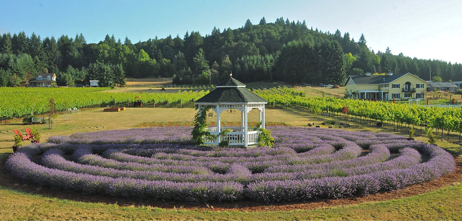 oregon, lavender labyrinth