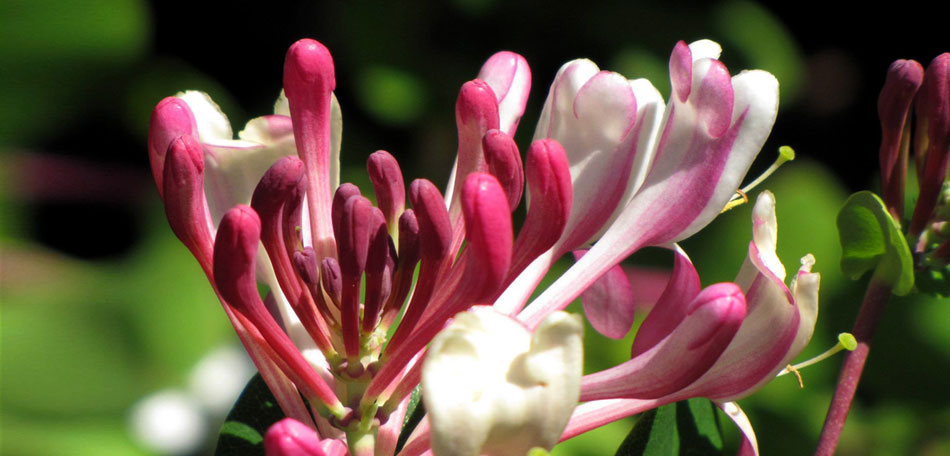 flower images, garden flowers, south africa
