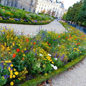 Luxembourg Gardens - Flower Path - Paris