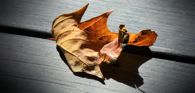 autumn, leaf, fan photos, autumn leaf, fall, fall leaf, deck, patio
