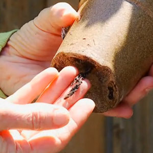 Nursery Plants - 3 Tips to Avoid Plant Disease - Long Plant Roots