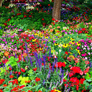 Popular Flowers - Garden - Outdoors - U.S. - Gardeners - Poll - Top 5 Flowers