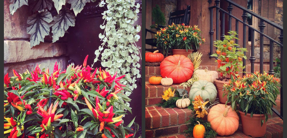pumpkin topiary ideas, peppers, pumpkins