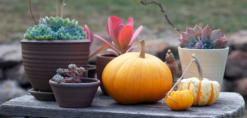 Fall Decorating: outdoor decorating, decorating ideas, porches, dining, dining tables, patio tables, table setting ideas, centerpieces, table centerpieces, fall centerpieces, autumn, fall, outdoors, tablescape, pumpkins, succulents, contemporary, modern