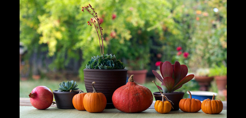 Fall Decorating: outdoor decorating, decorating ideas, porches, dining, dining tables, patio tables, table setting ideas, centerpieces, table centerpieces, fall centerpieces, autumn, fall, outdoors, tablescape, pumpkins, red, orange, colors, succulents