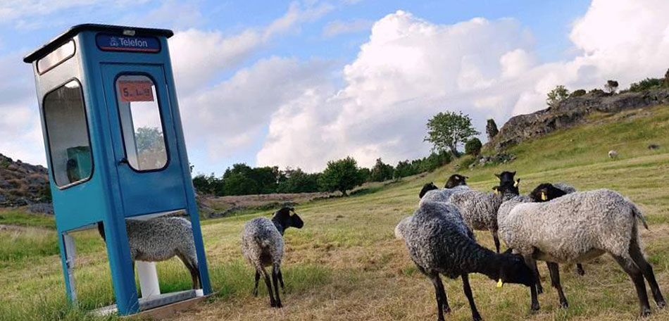 Animal Sculptures, Garden Art, Public Art, Statuary, Statues, Sculpure Garden, Garden Sculptures, Garden Statuary, Garden Sculpture, Animal Sculptures, Animal Statues, Sculpture Gardens, Animal Sculpture, Animals, Parks, Places to Visit, Sweden, Swedish, Sculptors, Tjorn, Pilane, Phone Booth, Sheep