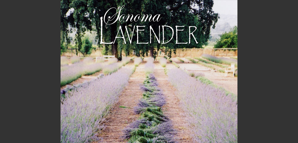 sonoma lavender farm, california