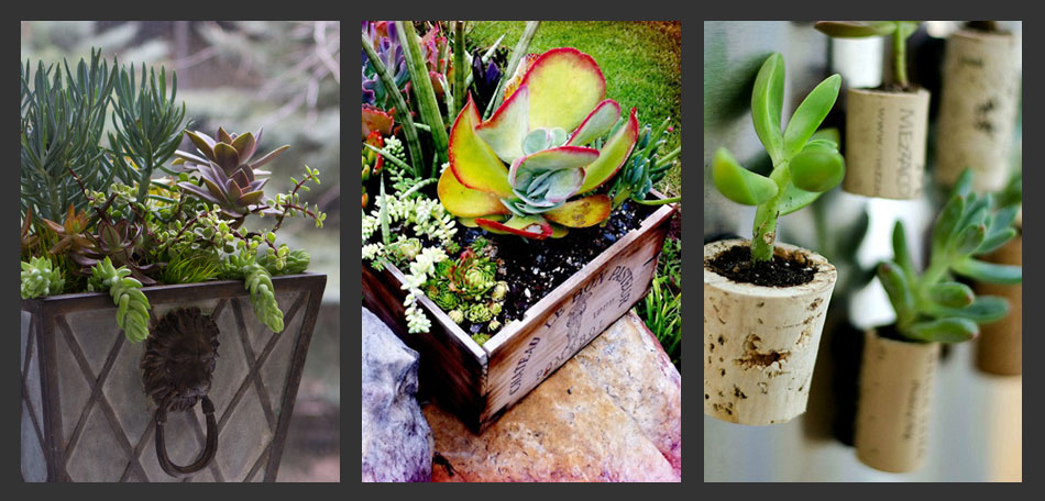 planting succulents, container gardening ideas