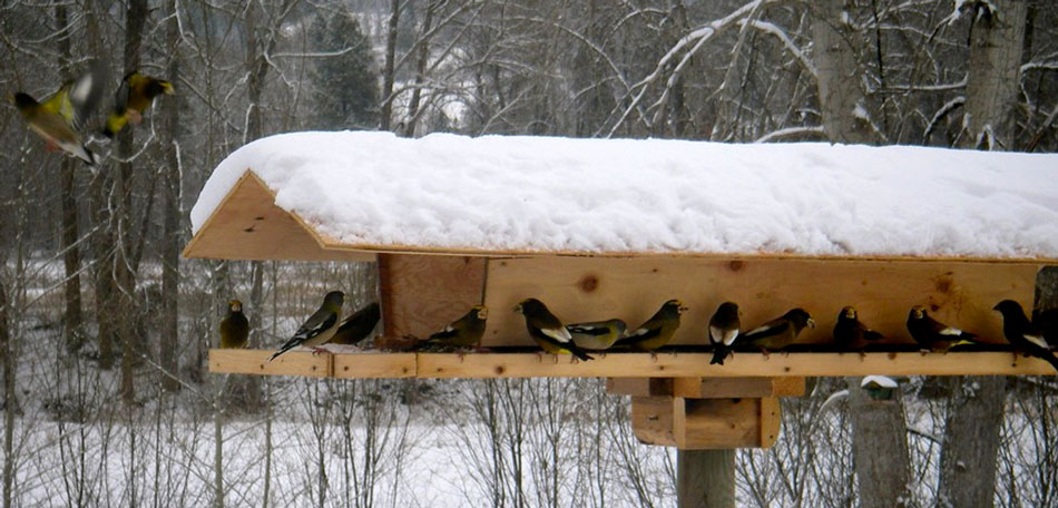 birds, bird feeders, backyard, bird feeder, bird watching, backyard birds, winter birds, bird feeder, birdwatching, bird table