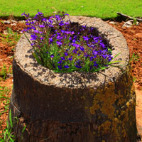 How to Make a Tree Stump Planter: Steps - Gardening - Flowers - Finished Planter