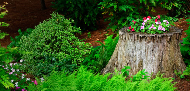 How to Make a Tree Stump Planter: Steps - Gardening - Flowers