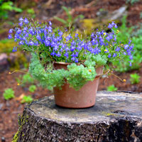 How to Make a Tree Stump Planter: Steps - Gardening - Easy Way - Plant Container on Stump