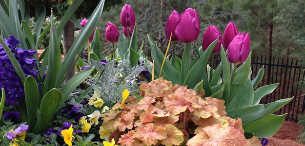 Popular Flowers - Tulip - Tulip Container Garden