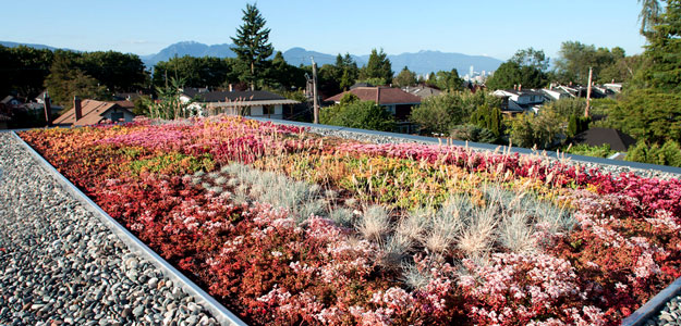 Rooftop Gardens: Ancient Idea - Modern Benefits - Rooftop Garden - Green Roof - Vancouver