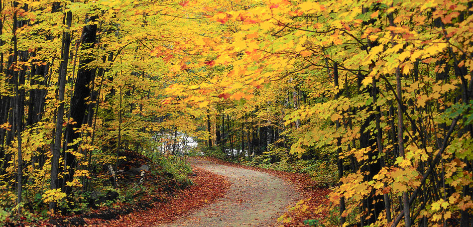 Green Mountain National Forest, Vermont, fall foliage