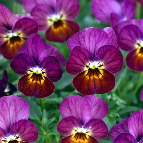 Flower Power 10 Easy Plants That Can Take The Heat And Bloom All