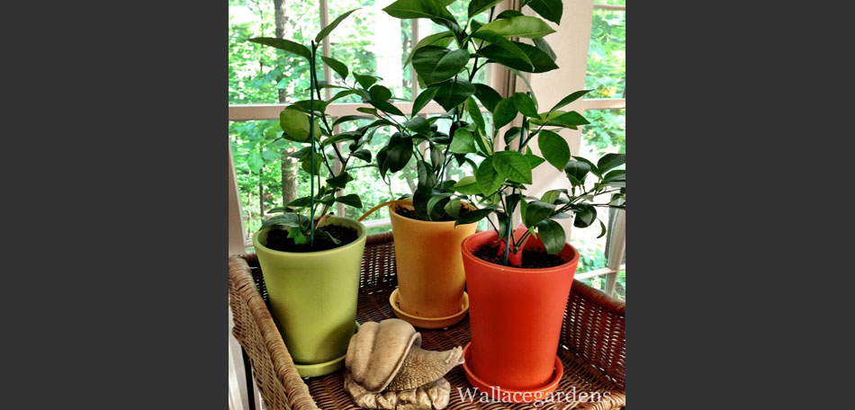 Holiday and Winter Gardening Ideas « Bombay Outdoors