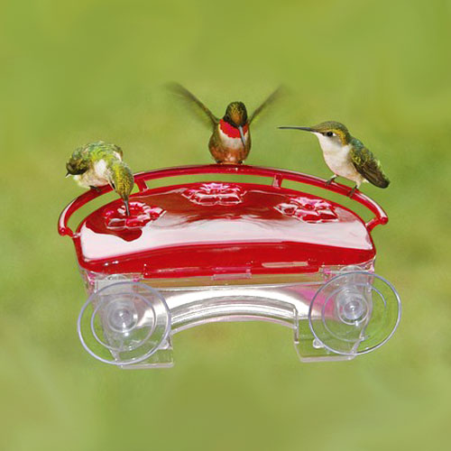 birds, bird, backyard, bird feeder, outdoor decor, window, bird-watching, bird watching, bird food, backyard birds, winter birds, bird feeder, birdwatching, bird feeding, hummingbird, hummingbirds, hummingbird feeder, hummingbird feeders