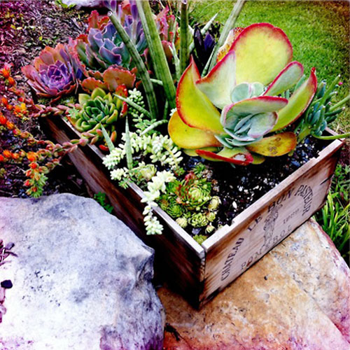planting succulents, repurposed wine box planter